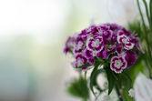 Floral wedding arrangement — Stock Photo