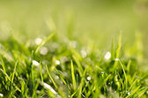 Grass under summer sun — Stock Photo