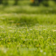 Grass and cobweb — Stock Photo #39757283