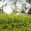 Grass and cobweb — Stock Photo #39757287
