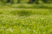 Grass and cobweb — Stock Photo