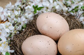 Chicken eggs — Stock Photo