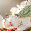 Butterfly in a spring day — Stock Photo #45994015