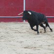 Black bull running in bullring — Stock Photo #12286383