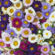 Pattern of flowers of different colors — Stock Photo #12675750