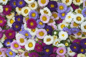 Pattern of flowers of different colors — Stock Photo