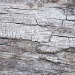 Cracked tree bark texture — Stock Photo