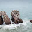 Tree big rocks at Cantabrisea — Stock Photo #13489410