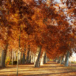 Trees in the park of Aranjuez, in autumn - Stok fotoğraf