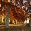 Trees in the park of Aranjuez, in autumn - Stock Photo
