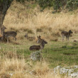 Group of deer lying in grass, Riofrio, Spain — Stock Photo #13514356