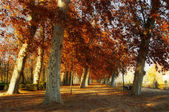 Trees in the park of Aranjuez, in autumn — Stock Photo