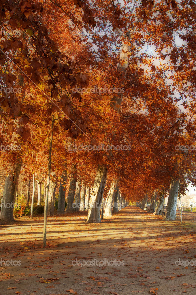 Trees in the park of Aranjuez, in autumn — Stock Photo #13511069