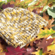 Woolen cap on autumn leaves — Stock Photo #13782257