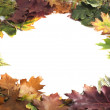 Autumn leaves frame on white background — Stock Photo