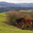Brown horse in green pastures — Stock Photo #13903449