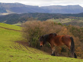 Brown horse in the green pastures — Stock Photo