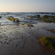 Green algae in the rocks, at sunset in Barrika beach, Spain — Stock Photo