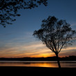 Silhouette of a tree at sunset in the reservoir Garaio — Stock Photo