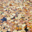 Pile of dried leaves in pond — Stock Photo #15552545