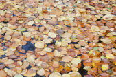 Pile of dried leaves in a pond — Stock Photo