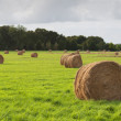 Bales of dry grass in the green field, Saint Cado, France - Stock Photo