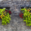 Old stone wall adorned with red and yellow flowers - Stock Photo