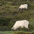 Sheep grazing in Sierra Salvada mountains, Spain - Stock Photo