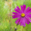 Beautyful pink flower on green — Stock Photo #19756501