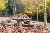 Foglie secche su un tavolo in un parco in autunno — Foto Stock