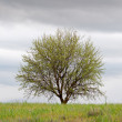 Lone tree in a green field with cloudy sky — Stock Photo