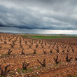 Vineyards in La Rioja, Spain — Stock Photo