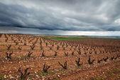 Vineyards in La Rioja, Spain — Stock Photo