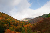 View of the mountain trees with fall colors, Burgos, Spain — Stock Photo