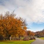Beautiful autumn trees in Urbasa mountains, Navarra, Spain — Stock Photo