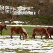 Horses in the fields covered by the snow — Stock Photo