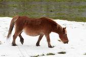 Cheval dans le domaine couvert par la neige — Photo