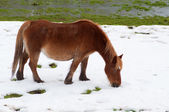 Horse in the field covered by the snow — Stock Photo