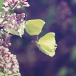 Two yellow butterfly flying around a pink flower. Vintage style — Stock Photo
