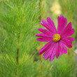 Beautyful pink flower on green — Stock Photo