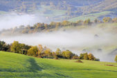 Green pasture with trees and shrubs, on a cold morning with fog in the valley — Stock Photo