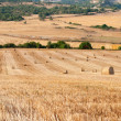 Bales of straw in the wheat fields — Stock Photo
