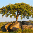 Stock Photo: Oak tree in rocky meadows, Extremadura, Spain