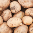Freshly harvested potatoes on the ground — Stock Photo