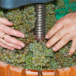 Wine making process with a  manual grape crushing machine — Stock Photo