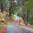 Rural road in a pine forest in autumn — Stock Photo