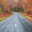 Road in forest in autumn, fall colors — Stock Photo #37079143