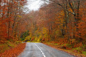 Road in the forest in autumn, fall colors — Stock Photo