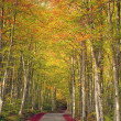 Country road in beech tree forest, beutiful autumn colors — Stock Photo #37824765