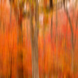 Abstract blurred background. Autumn trees — Stock Photo #38673729
